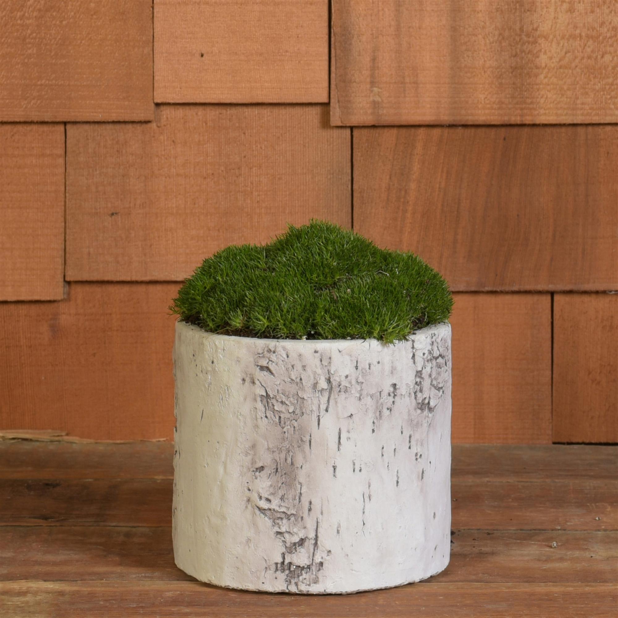 4836-6- Set of 4 - Faux Birch Cylinder - Cement - Medium by HomArt